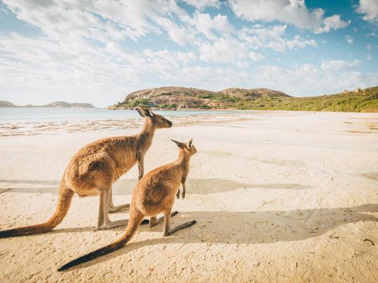 澳洲野生动物观赏宝典